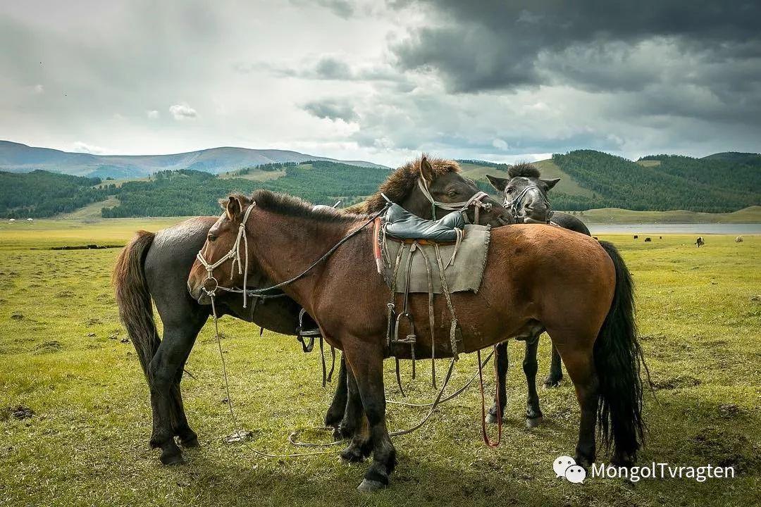 蒙古影像-- Henne Metz 第8张