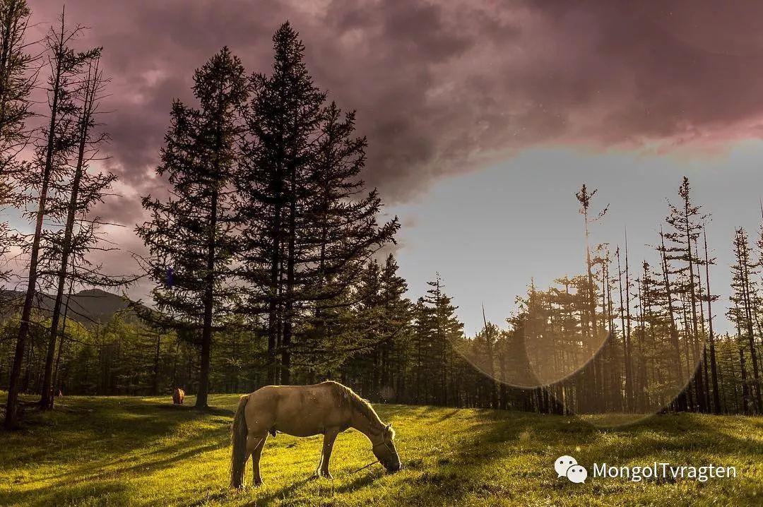 蒙古影像-- Henne Metz 第11张 蒙古影像-- Henne Metz 蒙古文化
