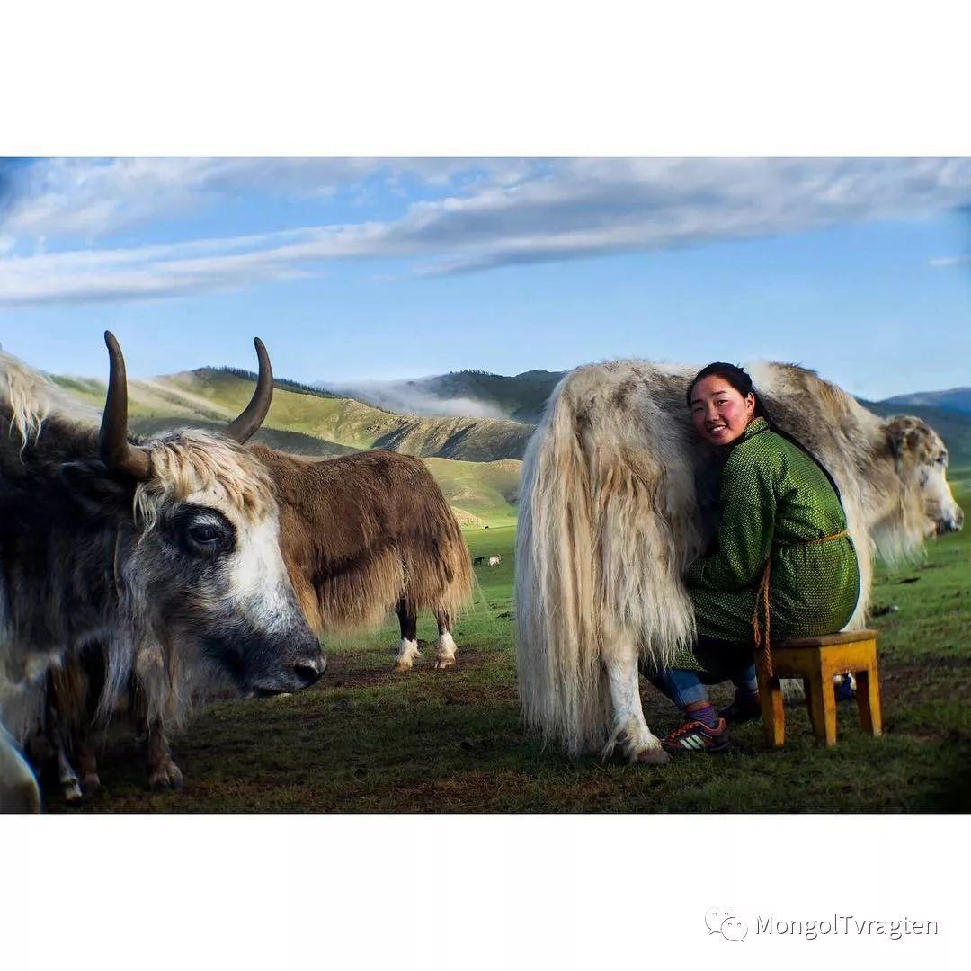 蒙古影像- c8x photography 第3张 蒙古影像- c8x photography 蒙古文化