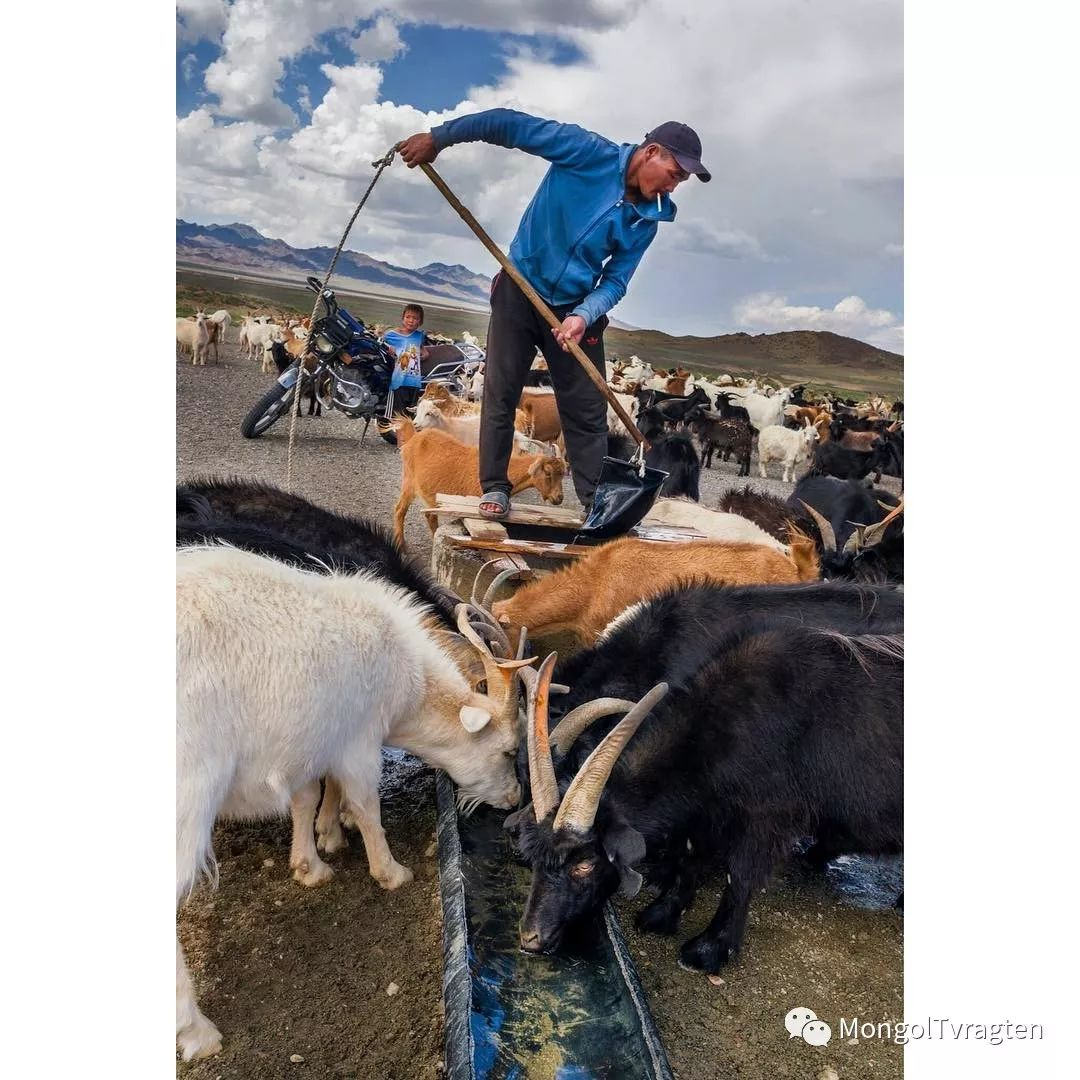 蒙古影像- c8x photography 第31张 蒙古影像- c8x photography 蒙古文化