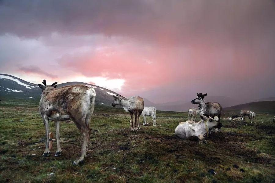 【蒙古影像】蒙古游牧生活 难以捉摸的美 第1张 【蒙古影像】蒙古游牧生活 难以捉摸的美 蒙古文化
