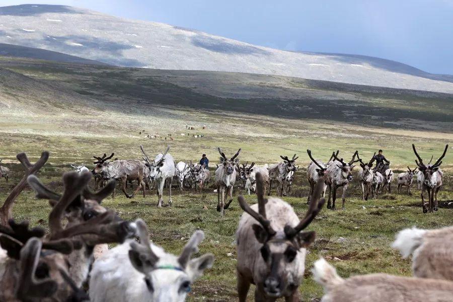 【蒙古影像】蒙古游牧生活 难以捉摸的美 第7张 【蒙古影像】蒙古游牧生活 难以捉摸的美 蒙古文化