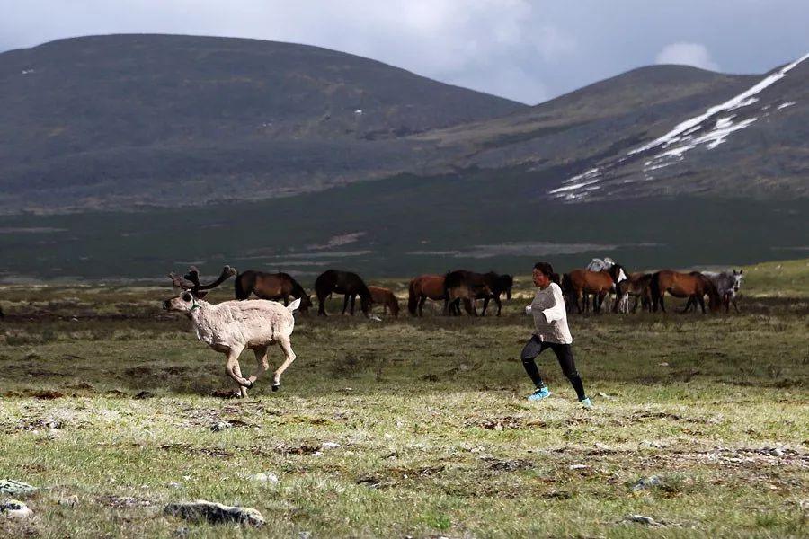 【蒙古影像】蒙古游牧生活 难以捉摸的美 第8张 【蒙古影像】蒙古游牧生活 难以捉摸的美 蒙古文化