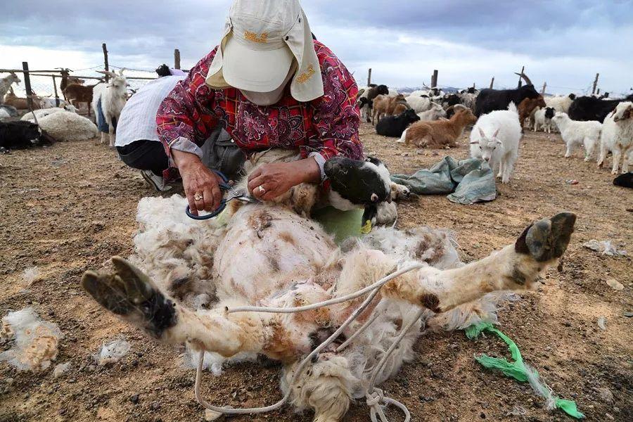 【蒙古影像】蒙古游牧生活 难以捉摸的美 第61张 【蒙古影像】蒙古游牧生活 难以捉摸的美 蒙古文化