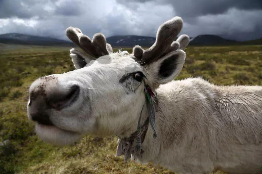 【蒙古影像】蒙古游牧生活 难以捉摸的美 第64张 【蒙古影像】蒙古游牧生活 难以捉摸的美 蒙古文化