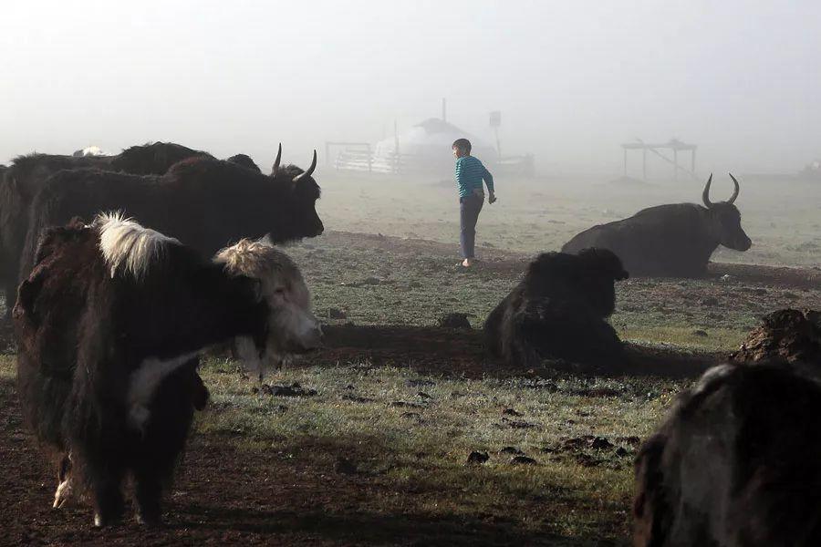 【蒙古影像】蒙古游牧生活 难以捉摸的美 第67张 【蒙古影像】蒙古游牧生活 难以捉摸的美 蒙古文化