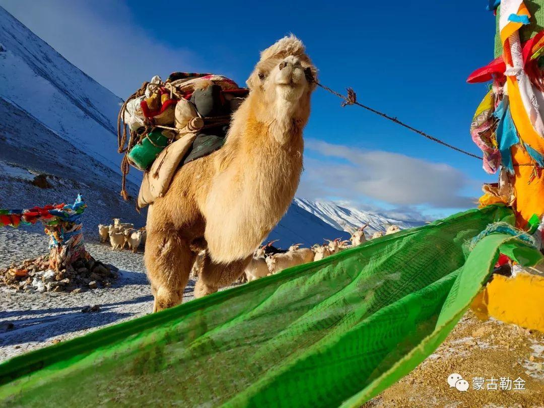 【蒙古影像】带你了解蒙古人的游牧生活 第2张 【蒙古影像】带你了解蒙古人的游牧生活 蒙古文化