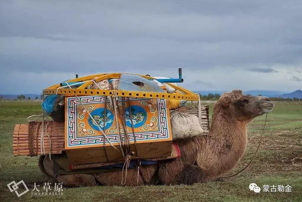 【蒙古影像】带你了解蒙古人的游牧生活 第3张 【蒙古影像】带你了解蒙古人的游牧生活 蒙古文化