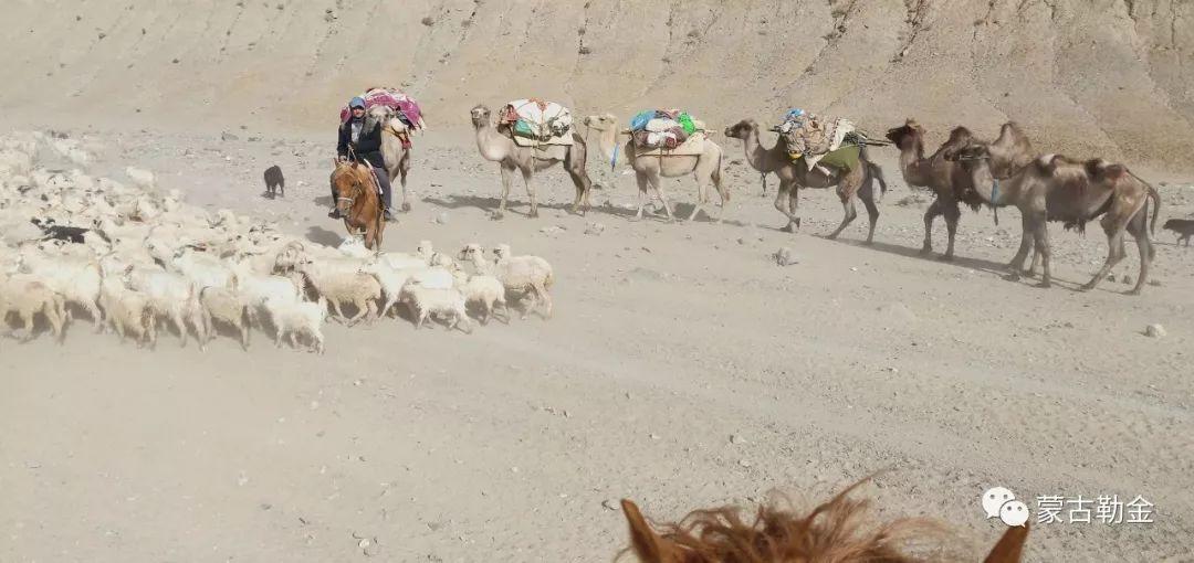 【蒙古影像】带你了解蒙古人的游牧生活 第5张 【蒙古影像】带你了解蒙古人的游牧生活 蒙古文化