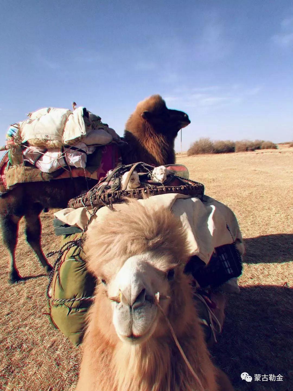【蒙古影像】带你了解蒙古人的游牧生活 第6张 【蒙古影像】带你了解蒙古人的游牧生活 蒙古文化