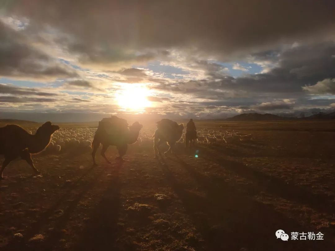 【蒙古影像】带你了解蒙古人的游牧生活 第10张 【蒙古影像】带你了解蒙古人的游牧生活 蒙古文化