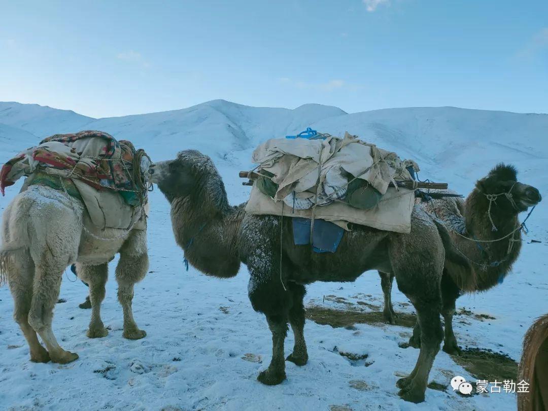 【蒙古影像】带你了解蒙古人的游牧生活 第9张 【蒙古影像】带你了解蒙古人的游牧生活 蒙古文化