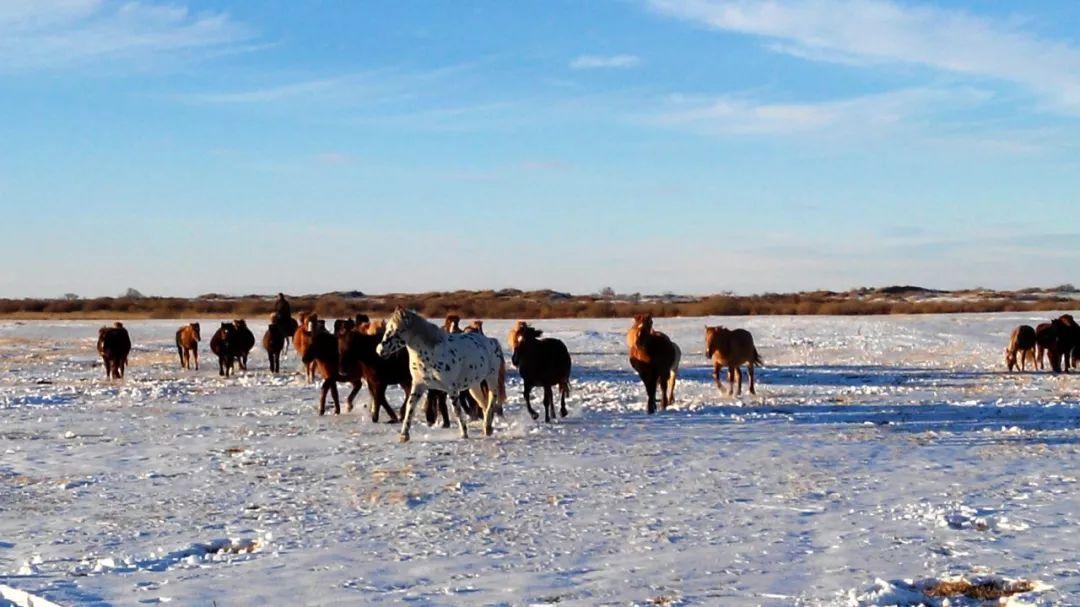 巴尔虎传统文化【第三十七期】 第1张 巴尔虎传统文化【第三十七期】 蒙古文化
