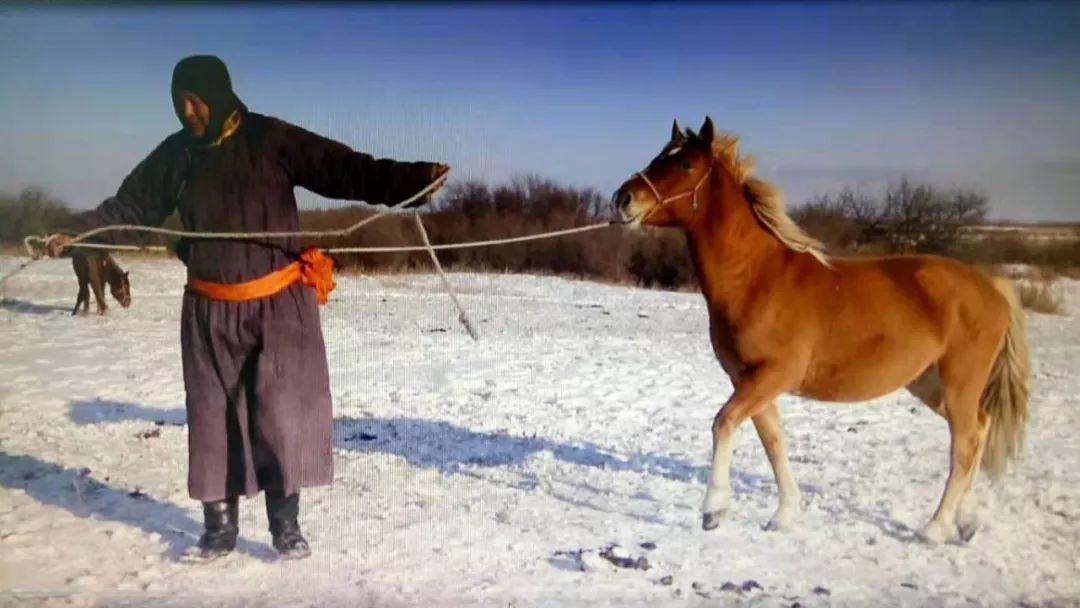 巴尔虎传统文化【第三十七期】 第7张 巴尔虎传统文化【第三十七期】 蒙古文化