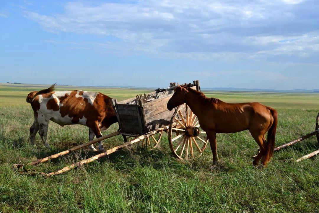 巴尔虎传统文化【第三十二期】 第16张 巴尔虎传统文化【第三十二期】 蒙古文化