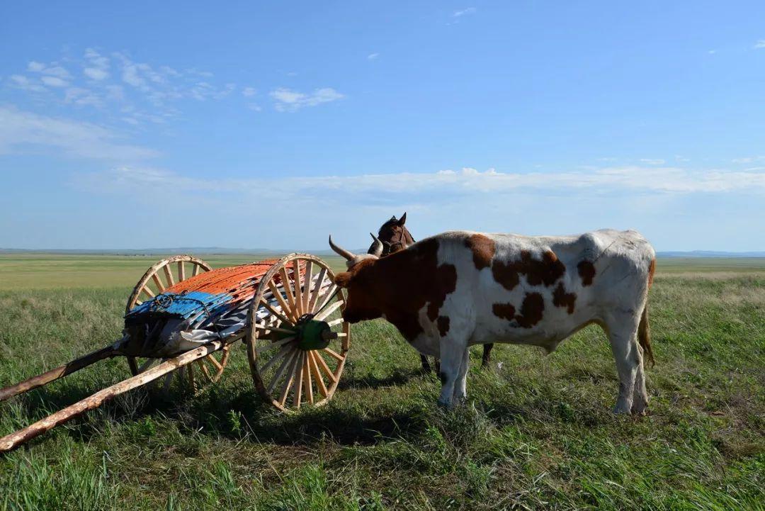 巴尔虎传统文化【第三十二期】 第20张 巴尔虎传统文化【第三十二期】 蒙古文化