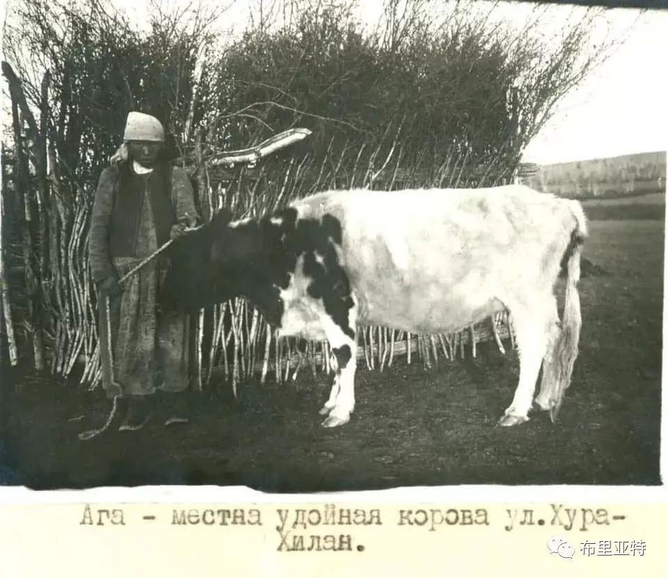 布里亚特蒙古人迁入呼伦贝尔始末 第5张 布里亚特蒙古人迁入呼伦贝尔始末 蒙古文化