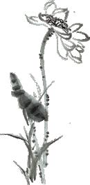 三弦丨Shanz3-《Judar》 第7张 三弦丨Shanz3-《Judar》 蒙古音乐
