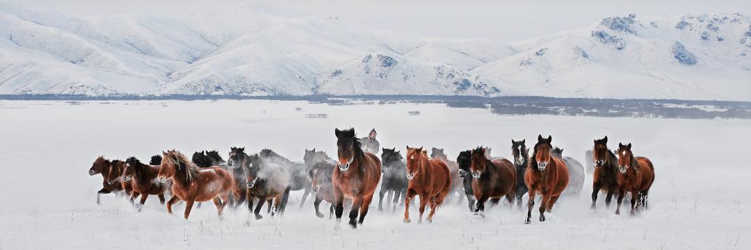 蒙古马摄影作品欣赏 第1张 蒙古马摄影作品欣赏 蒙古文化