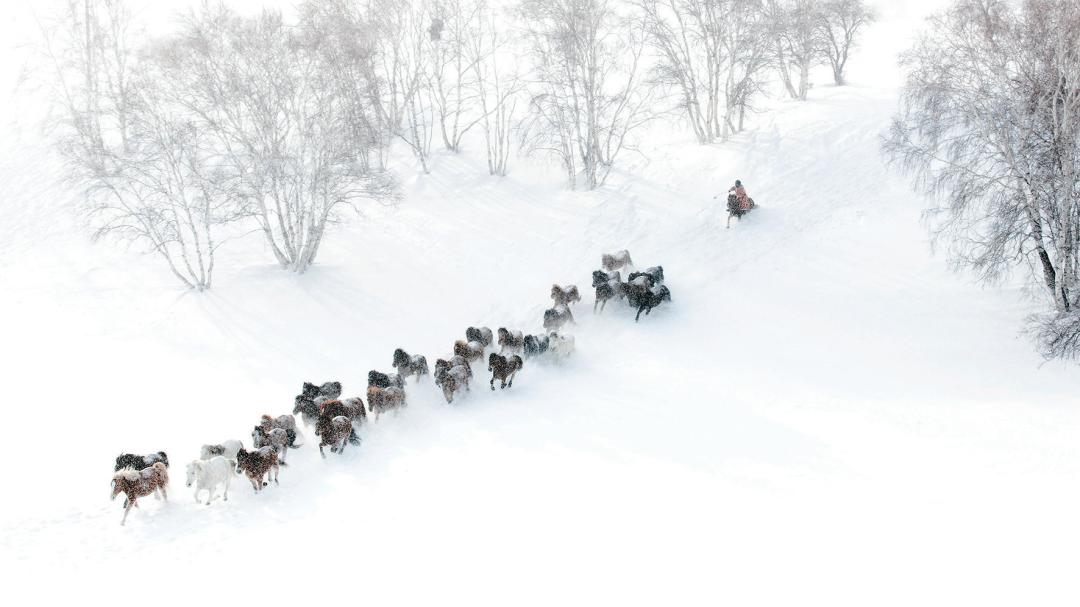 蒙古马摄影作品欣赏 第4张 蒙古马摄影作品欣赏 蒙古文化