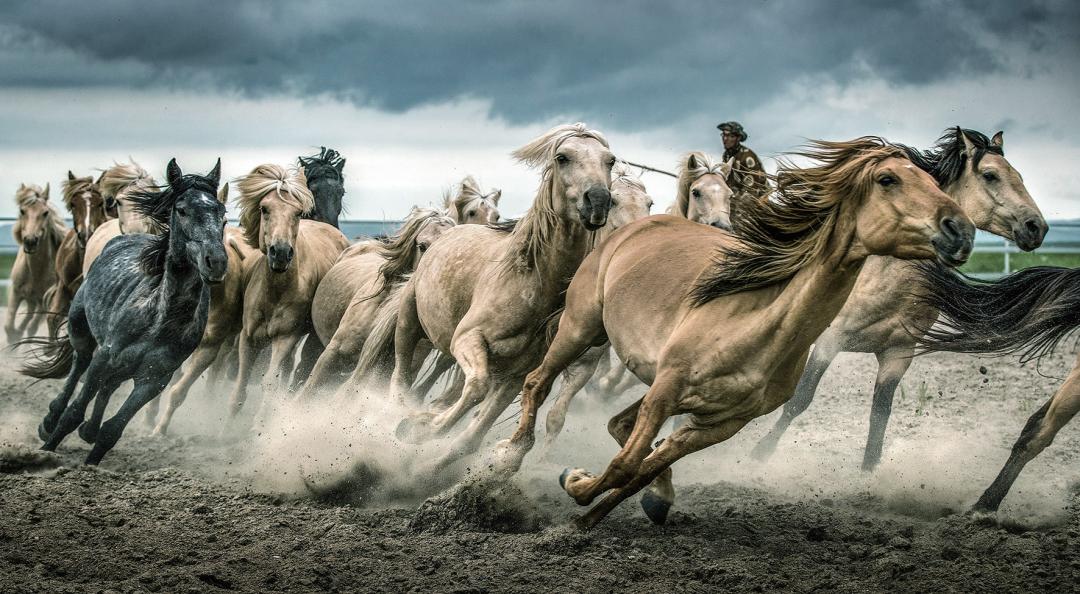 蒙古马摄影作品欣赏 第9张 蒙古马摄影作品欣赏 蒙古文化