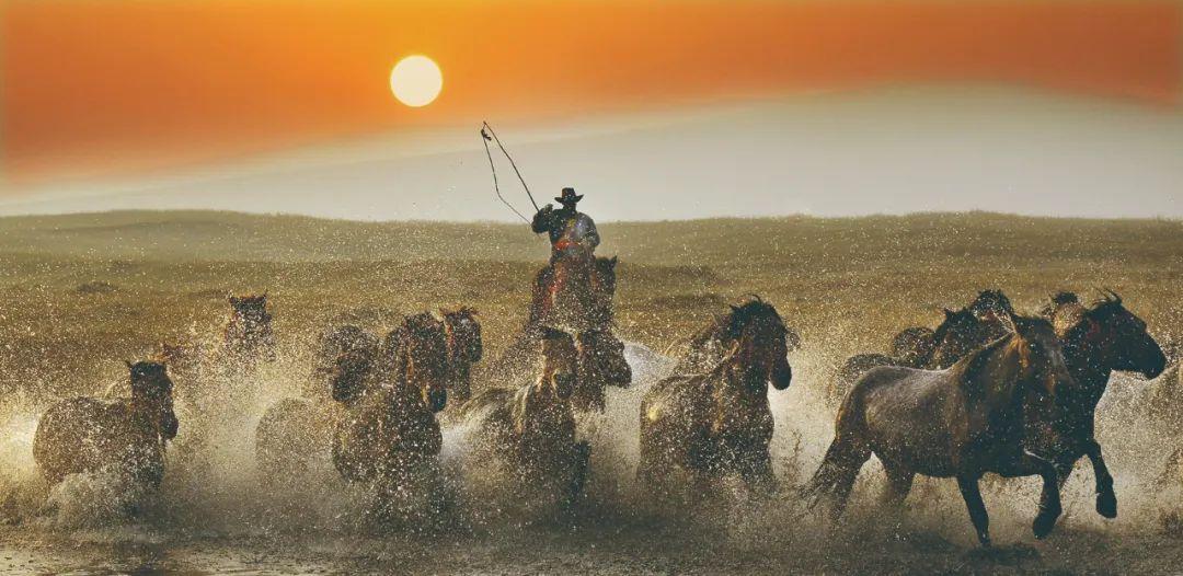 蒙古马神采 第1张 蒙古马神采 蒙古文化