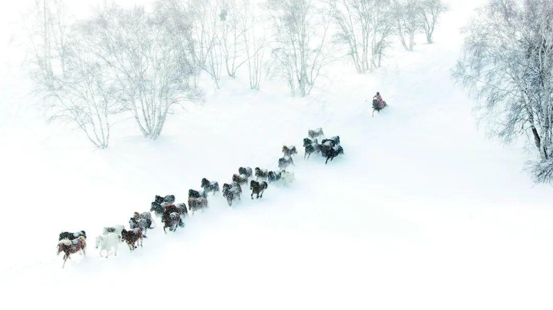 蒙古马神采 第2张 蒙古马神采 蒙古文化