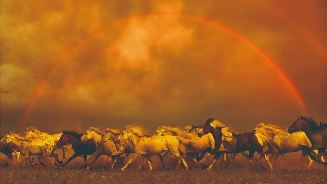 蒙古马神采 第5张 蒙古马神采 蒙古文化