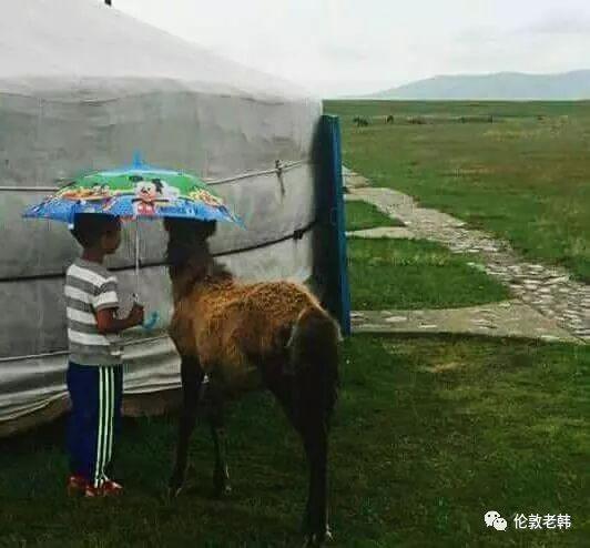 蒙古孩子 第12张