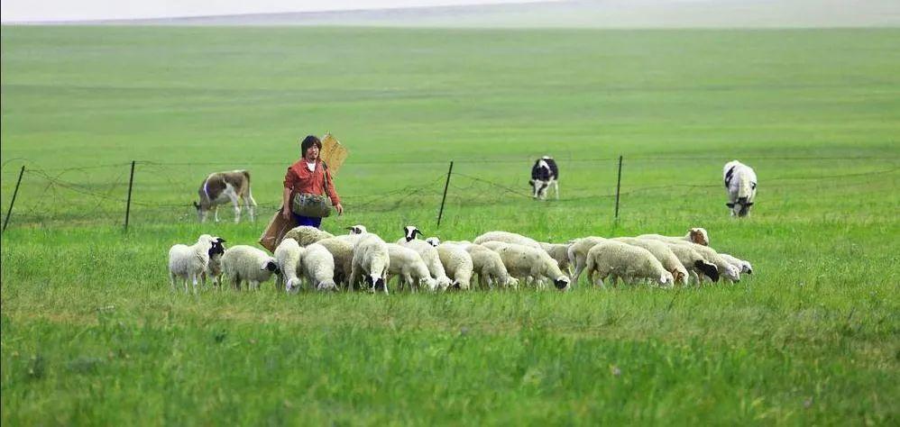 蒙古语电影《白云之下》已经上映了 第6张 蒙古语电影《白云之下》已经上映了 蒙古音乐
