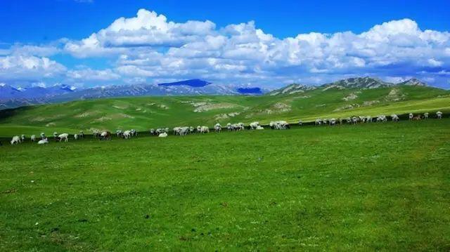 新疆巴音郭楞蒙古自治州和静县巴音布鲁克草原美景 第21张 新疆巴音郭楞蒙古自治州和静县巴音布鲁克草原美景 蒙古文化