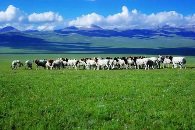 新疆巴音郭楞蒙古自治州和静县巴音布鲁克草原美景 第23张 新疆巴音郭楞蒙古自治州和静县巴音布鲁克草原美景 蒙古文化