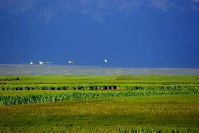 新疆巴音郭楞蒙古自治州和静县巴音布鲁克草原美景 第27张 新疆巴音郭楞蒙古自治州和静县巴音布鲁克草原美景 蒙古文化