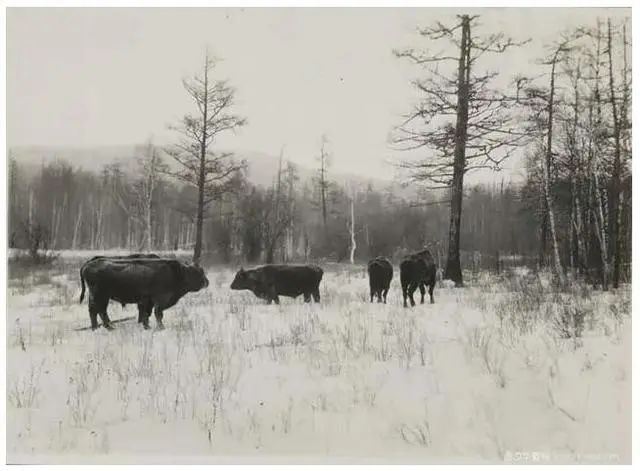 民国老照片 |1925-1935年内蒙古呼伦贝尔 第4张