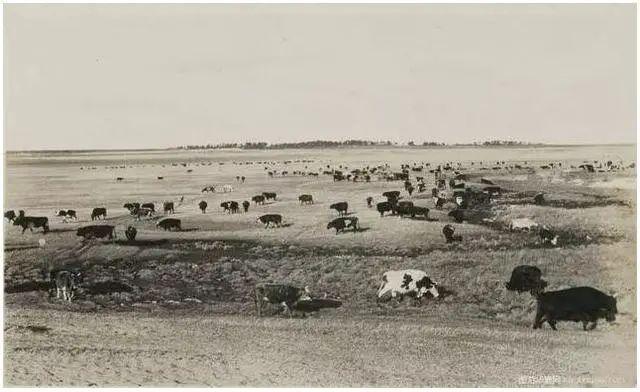 民国老照片 |1925-1935年内蒙古呼伦贝尔 第7张