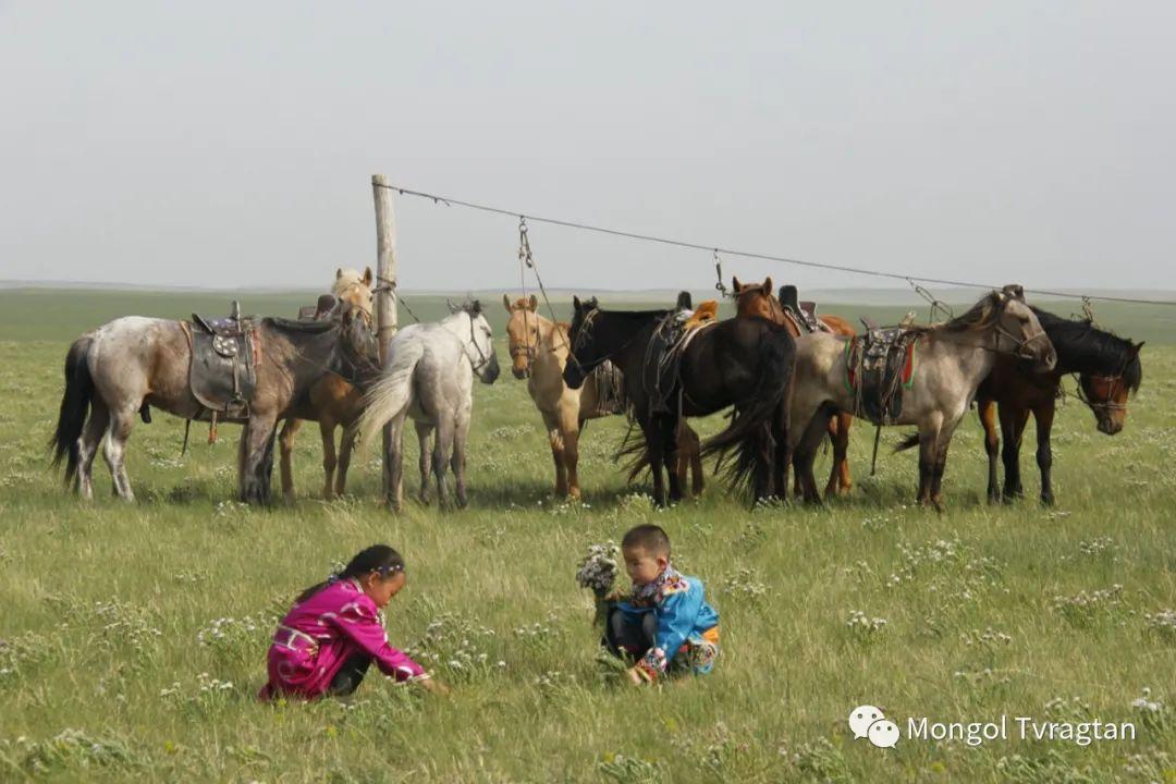 ᠮᠤᠩᠭᠤᠯ ᠵᠢᠷᠣᠭ- ᠰᠠᠷᠠᠭᠣᠯᠴᠡᠴᠡᠭ 第7张 ᠮᠤᠩᠭᠤᠯ ᠵᠢᠷᠣᠭ- ᠰᠠᠷᠠᠭᠣᠯᠴᠡᠴᠡᠭ 蒙古文化