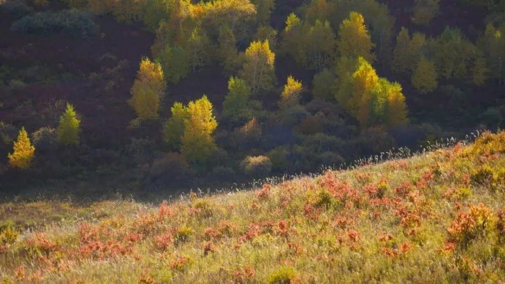 秋天的乌珠穆沁草原,太美了! 第15张 秋天的乌珠穆沁草原,太美了! 蒙古文化