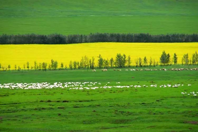 乌珠穆沁,一个美了千年的绝色草原 第4张 乌珠穆沁,一个美了千年的绝色草原 蒙古文化