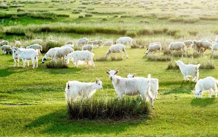 乌珠穆沁,一个美了千年的绝色草原 第5张 乌珠穆沁,一个美了千年的绝色草原 蒙古文化