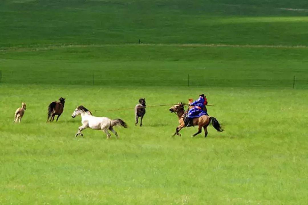 乌珠穆沁,一个美了千年的绝色草原 第19张 乌珠穆沁,一个美了千年的绝色草原 蒙古文化