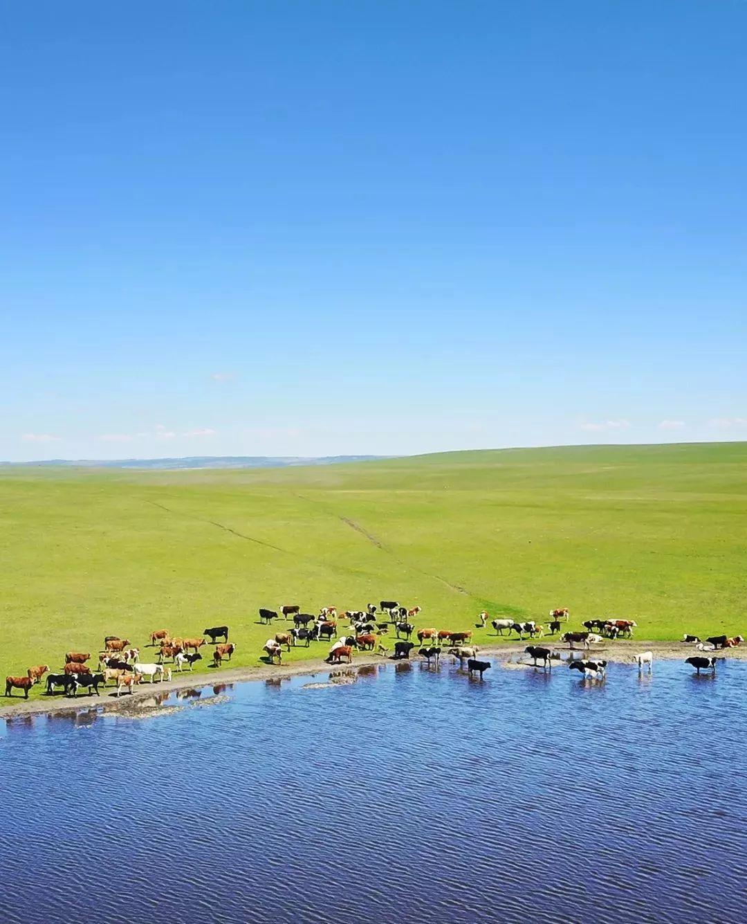 乌珠穆沁,一个美了千年的绝色草原 第30张 乌珠穆沁,一个美了千年的绝色草原 蒙古文化