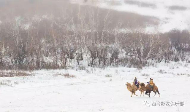 冬天的乌珠穆沁草原、美醉了