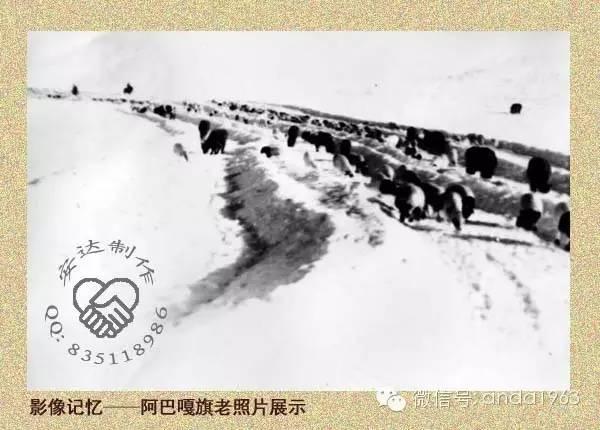 一起穿越回到70年代的苏尼特、阿巴嘎的冬季! 第10张 一起穿越回到70年代的苏尼特、阿巴嘎的冬季! 蒙古文化
