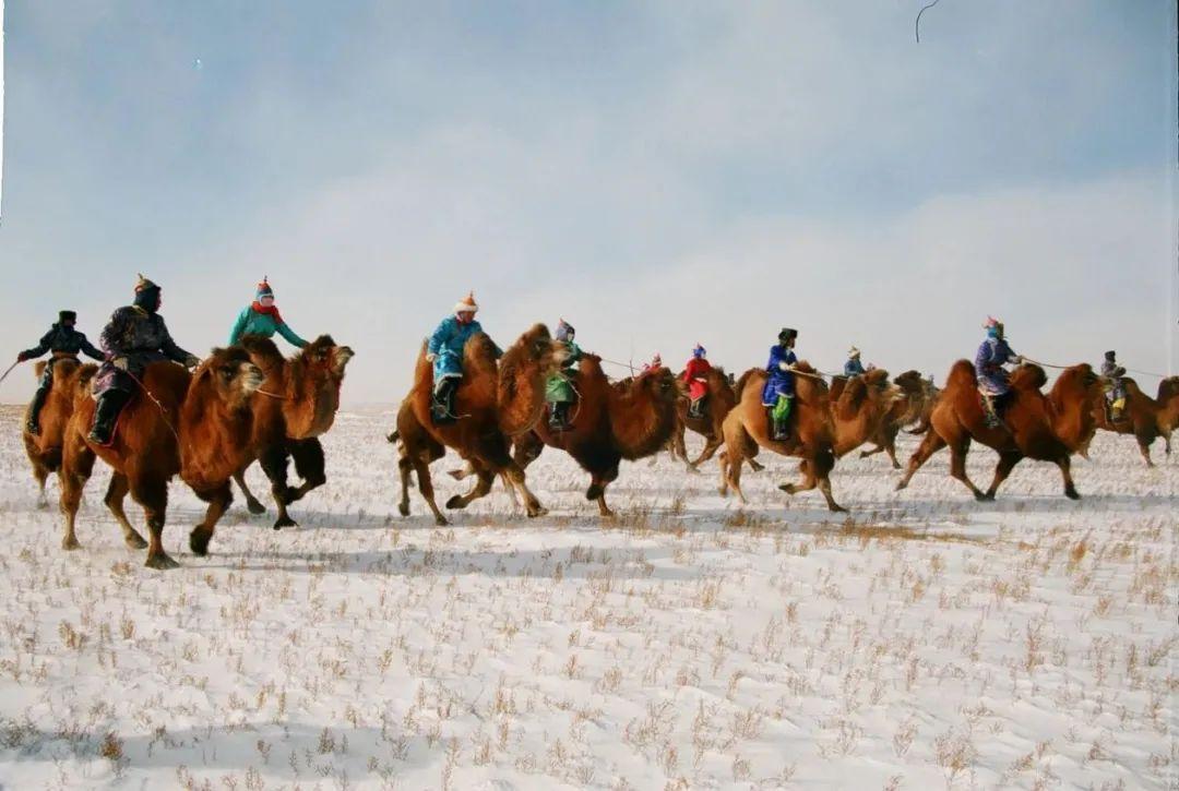 【乌拉特文化】之蒙古族赛驼 第3张