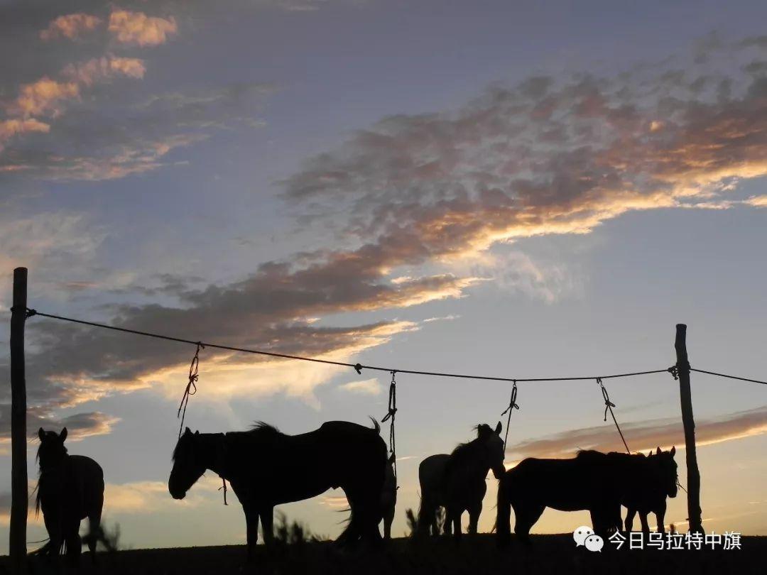 乌拉特文化 — 与马有关的禁忌 第1张 乌拉特文化 — 与马有关的禁忌 蒙古文化