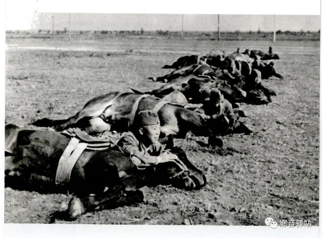 写在纪录片《内蒙古骑兵》开播之际——我区著名作家萨仁托娅 第10张 写在纪录片《内蒙古骑兵》开播之际——我区著名作家萨仁托娅 蒙古文化